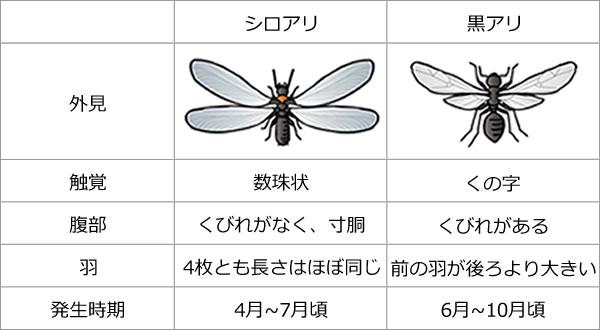 アリの比較表